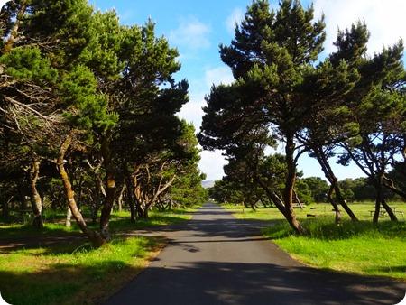 low trees