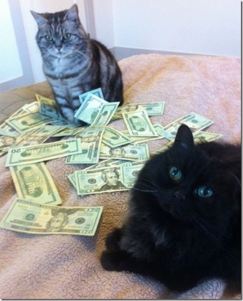 rich-wealthy-cats-4