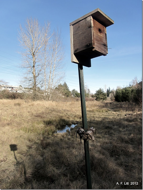 Birdhouse.  Springwater Corridor.  Gresham, Oregon.  February 6, 2012. Photo of the Day, February 19, 2012.