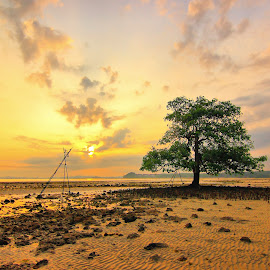 Tree in the Beach by Heppi Wasyeri - Landscapes Sunsets & Sunrises