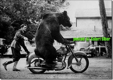 beruang bawa motor