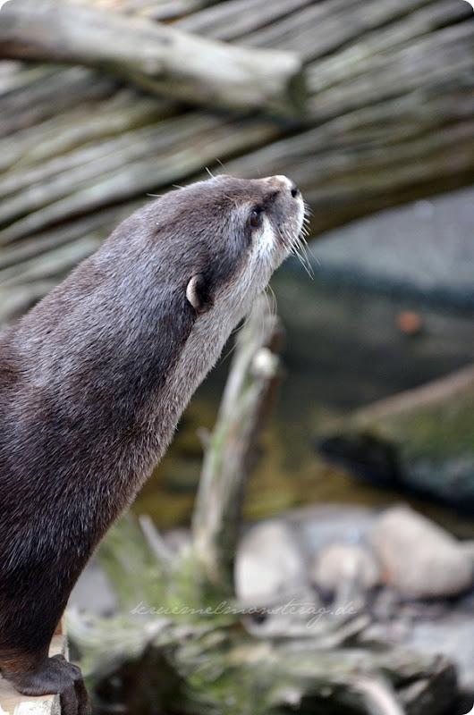 Wremen 20zwölf Tag 6 Zoo am Meer - Otter