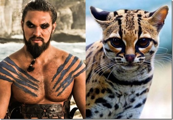 cats-game-thrones-8