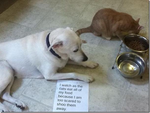 dog-shaming-bad-4