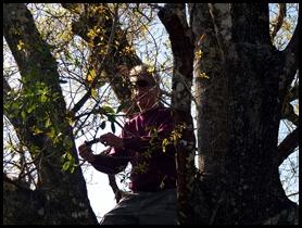 Dan up a tree