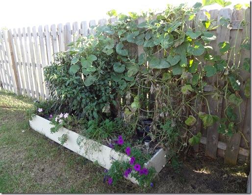 Garden October 3