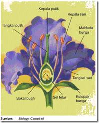 Bagian Bagian Bunga Dan Fungsinya Fertilisasi Pada Tumbuhan Kamus Q