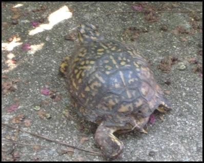 turtle 5_thumb[2]