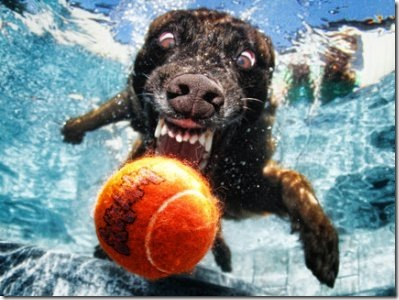 dogs-under-water_001