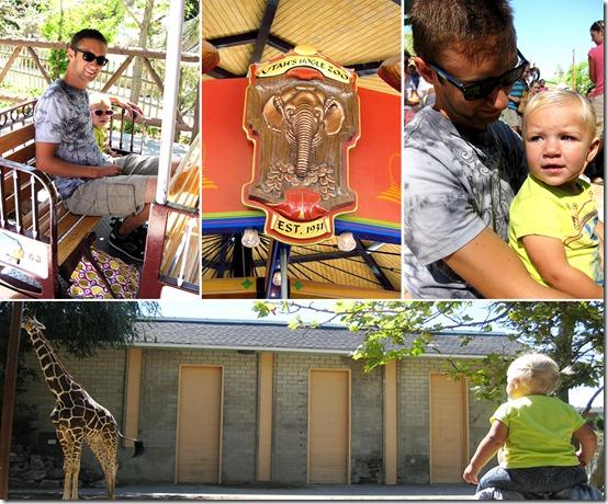 Hoggle Zoo 1