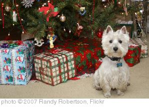 'Wee Westie Christmas 2007' photo (c) 2007, Randy Robertson - license: http://creativecommons.org/licenses/by/2.0/
