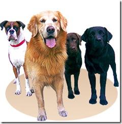 Cronograma de septiembre de esterilizaciones quirúrgicas gratuitas para perros