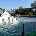 Dolphin show at the Shinagawa Aquarium in Shinagawa, Tokyo, Japan