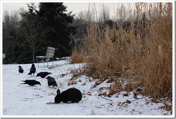 BlackRabbit BlackCrow