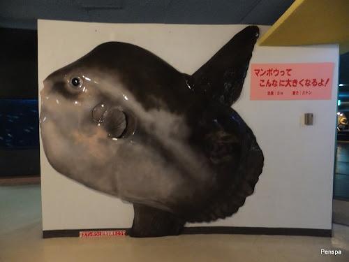 DSCF3985.JPG