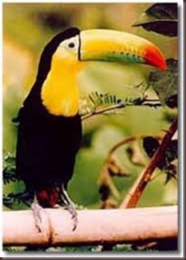 Amazing Pictures of Animals photo Nature exotic funny incredibel Zoo, Ramphastidae, Toucan, Bird, Alex (6)