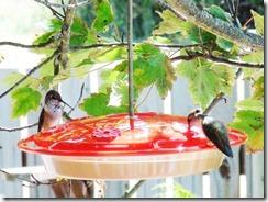 lopez hummingbird 071211 00005