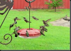 Hummingbirds-after-Rain-1-of-1-nggid03430-ngg0dyn-779x0x100-00f0w011c010r110f110r010t010