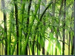 As Lições do bambú