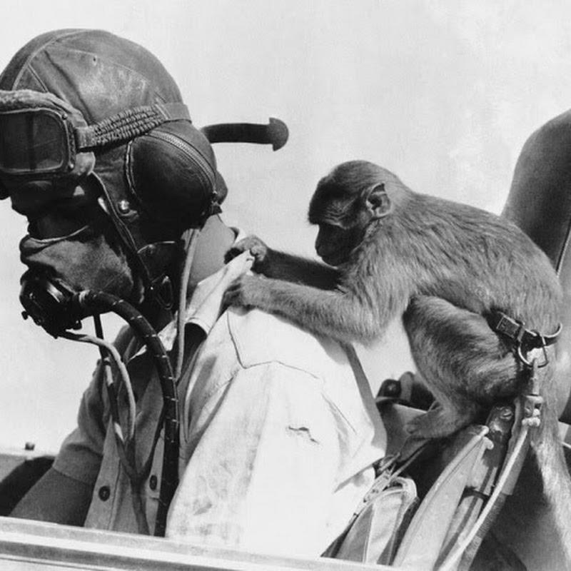 "25 fotografias ""descontraídas"" da Segunda Guerra Mundial"