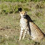 Gepard, Namiri Plains © Foto: Judith Nasse | Outback Africa Erlebnisreisen