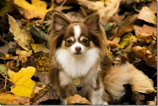 dogs_040