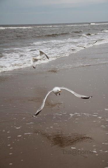 Egmond aan Zee 278 (2)