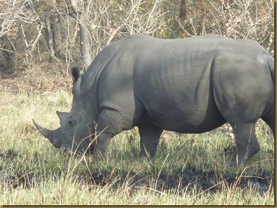 Ziwa, Murchison Falls trip 076