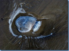 7145 Texas, South Padre Island - Beach access #3 - Jellyfish