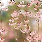 angkorsite_flower_1 (110).jpg