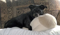 Kozmo with pillow 2