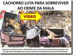 CACHORRO LUTA PARA SOBREVIVER AO CRIME DA MALA_thumb[1]