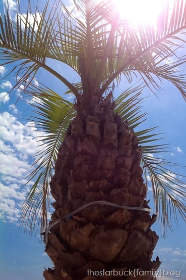Panama City Trip blog-19