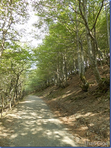 caminho de santiago 248
