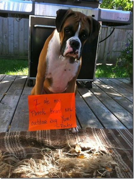 dog-shaming-bad-18