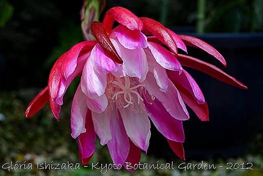 Glória Ishizaka -   Kyoto Botanical Garden 2012 - 10