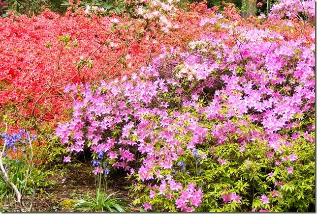 pink flower-1-2
