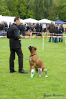 20100513-Bullmastiff-Clubmatch_31128.jpg