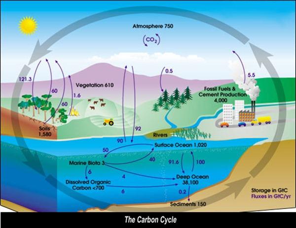 ciclo-del-carbono-para-colorear