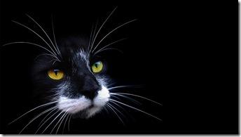 pisica-neagra