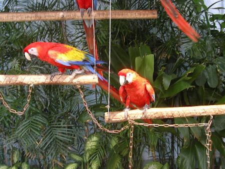 Vacanta Mexic: Papagali multi colori