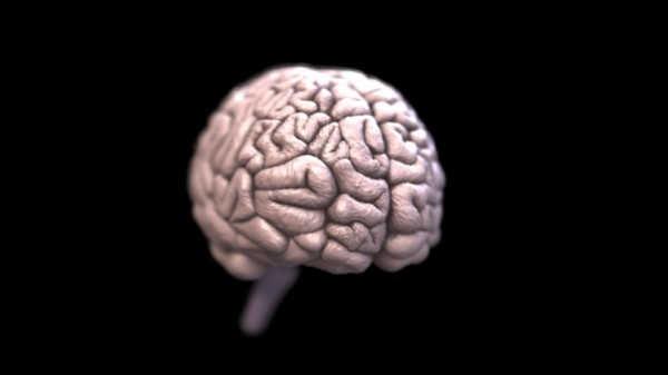 6- O cérebro humano é mais ativo durante o sono do que durante o dia.