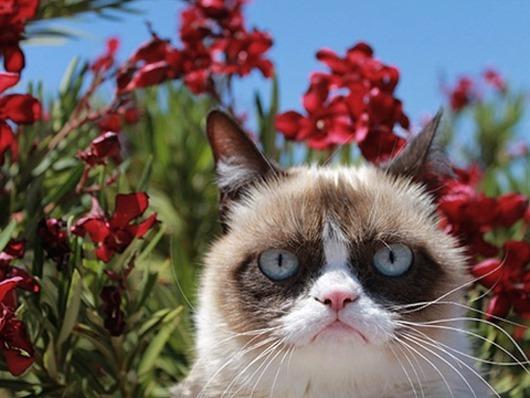 01-grumpy-cat-lgn