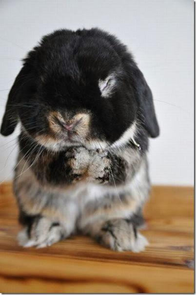 funny-animals-cute-026
