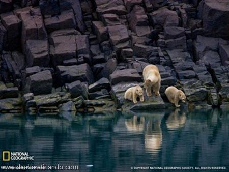 animais national geographic desbaratinando  (36)