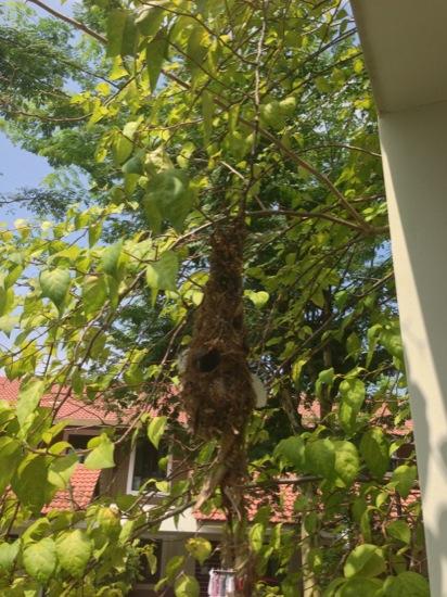 The birds nest - amazing piece of construction