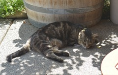 and a winery cat