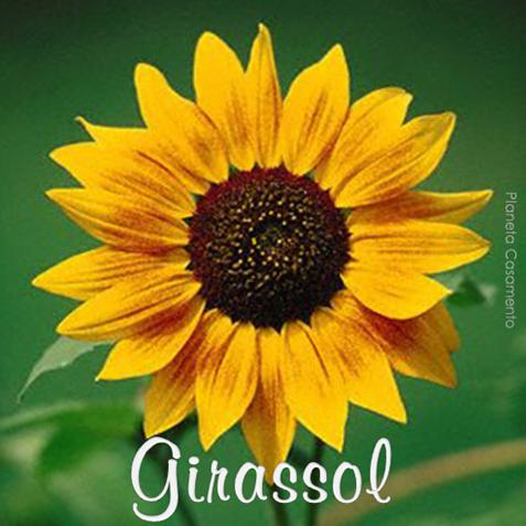 GIRASSOL - PLANETA CASAMENTO