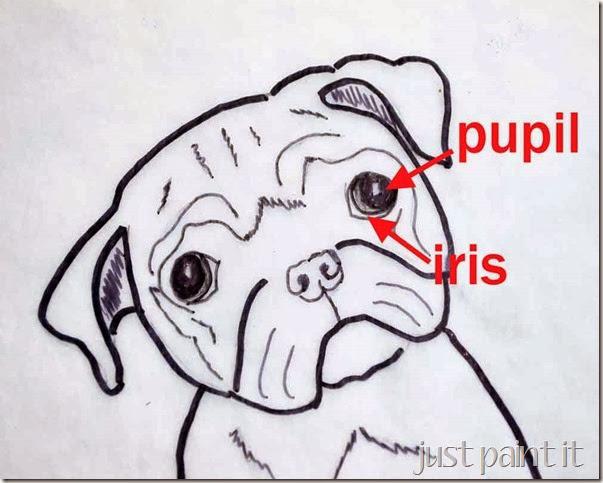 pug-eye-detail