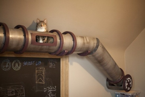 Trânsito de gatos 01